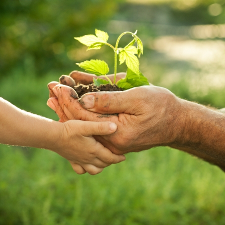 Foto de Hands of elderly man and baby holding a young plant against a green natural background in spring. Ecology concept - Imagen libre de derechos