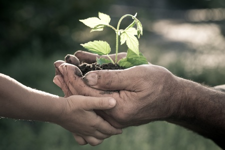 Photo for Hands of elderly man and baby holding a young plant against a natural background in spring. Ecology concept - Royalty Free Image