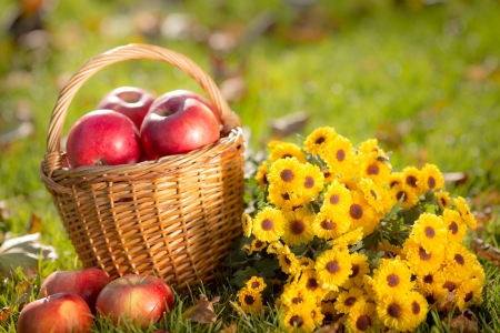 Foto de Basket with red apples and flowers in autumn outdoors  Healthy eating concept - Imagen libre de derechos