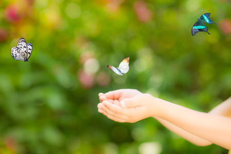 Photo pour Children hands and flying butterfly against green spring background. Ecology concept - image libre de droit