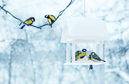 Photo pour Tit birds in white wooden feeder winter snowy frosty day on nature. - image libre de droit