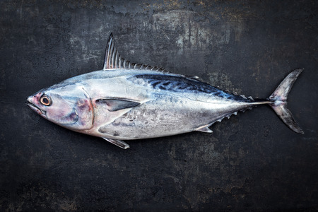 Photo pour Fresh saltwater bonito as top view on a black rustic background with copy space - image libre de droit