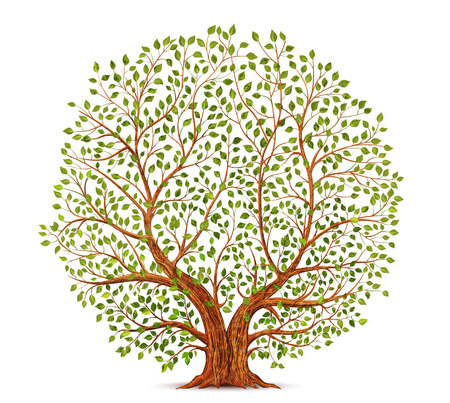 Photo for Old tree vector illustration - Royalty Free Image