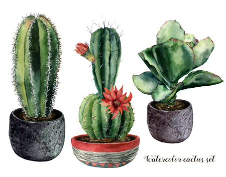 Photo pour Watercolor set with cactus and flowers in a pot composition. Hand painted cereus and echeveria with red flower isolated on white background. Illustration for design, print, fabric or background. - image libre de droit