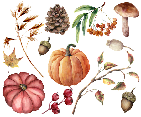 Photo pour Watercolor autumn plants set. Hand painted pumpkins, leaves, mushroom, rowan, apple, cone, acorn isolated on white background. Floral illustration for design, print or background - image libre de droit