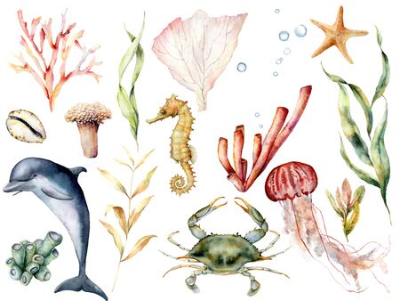 Foto de Watercolor sea life set. Hand painted coral reef, dolphin, crab, seahorse, jellyfish, starfish and laminaria isolated on white background. Aquatic wildlife illustration for design, print, background. - Imagen libre de derechos