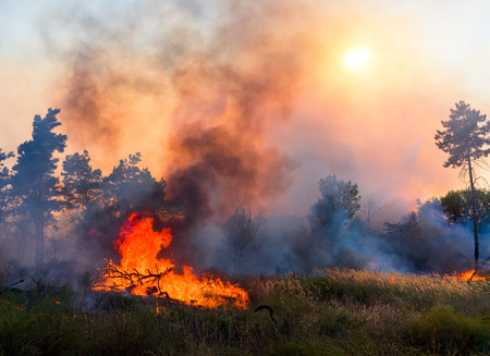 Foto de Forest fire. Using firebreak for stoping wildfire - Imagen libre de derechos