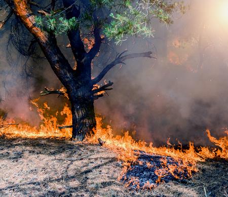 Foto de A bushfire burning orange and red at night. - Imagen libre de derechos