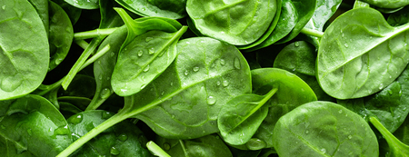 Foto de Fresh spinach leaves background. Healthy vegan food. Top view. Banner - Imagen libre de derechos