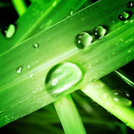 drop on grass macro close