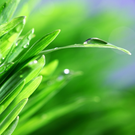 water drops on grass blade nature background
