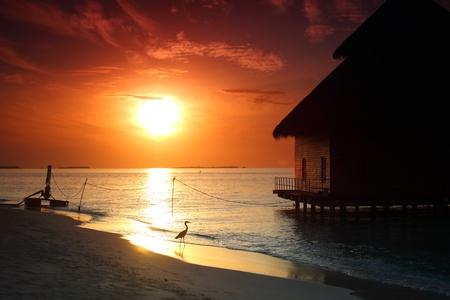 Photo pour resort maldivian houses on sunrise - image libre de droit