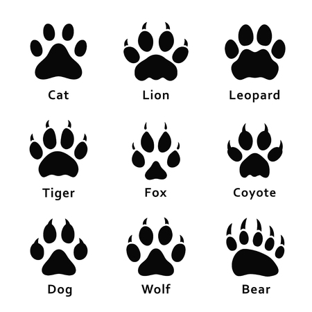 Illustrazione per Animals footprints, paw prints. Set of different animals and predators footprints and traces. Cat, lion, leopard, tiger, fox, wolf, coyote, dog, bear. Vector - Immagini Royalty Free