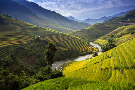 Photo for Rice farm in Vietnam - Royalty Free Image