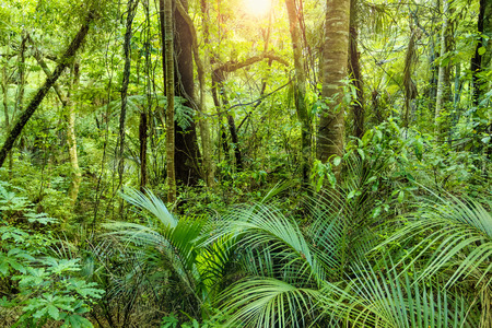 Photo for Lush Green Tropical Jungle background with the warm sun shining through - Royalty Free Image