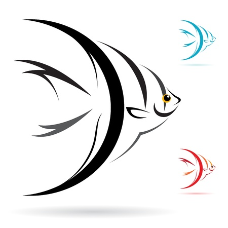 image of an angel fish on white background