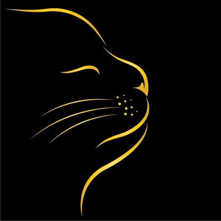 image of an cat on black background