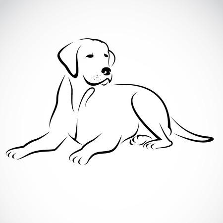 Illustration pour  Vector image of an dog labrador on white background  - image libre de droit