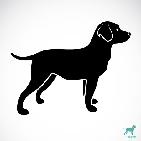 Photo for  Vector image of an dog labrador on white background  - Royalty Free Image