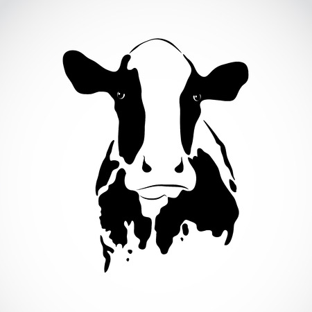 image of a cow on white