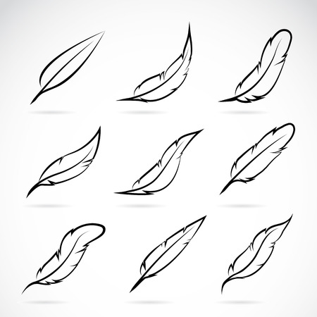 Photo for Vector group of feather on white background - Royalty Free Image
