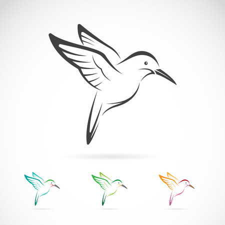 Illustration for Vector image of an hummingbird design on white background - Royalty Free Image