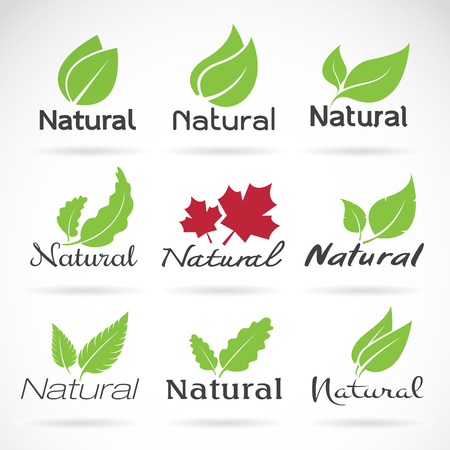 Illustration pour Natural logo design vector template on white background. Leaf icon - image libre de droit