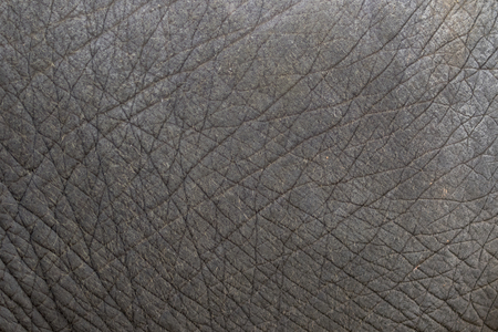Photo for close-up of elephant skin texture abstract background. - Royalty Free Image