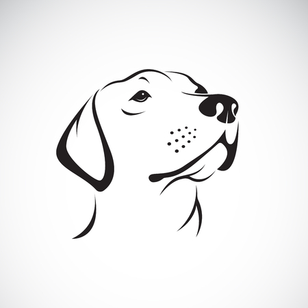 Illustration pour Vector of a dog head (Labrador Retriever) on white background - image libre de droit