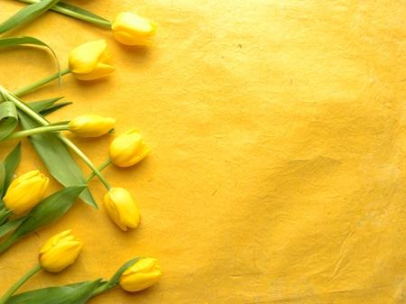 Foto de Yellow tulips on yellow background - Imagen libre de derechos