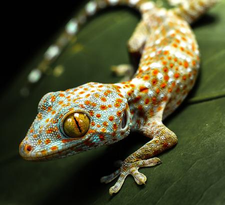 Foto de Geckos creeping - Imagen libre de derechos