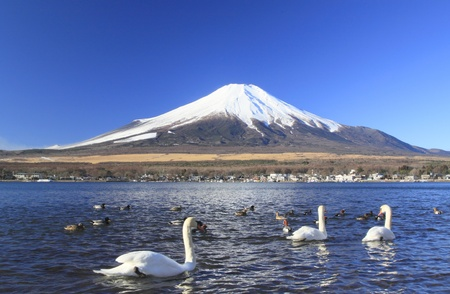 Mt.fuji and swans in  Lake Yamanaka