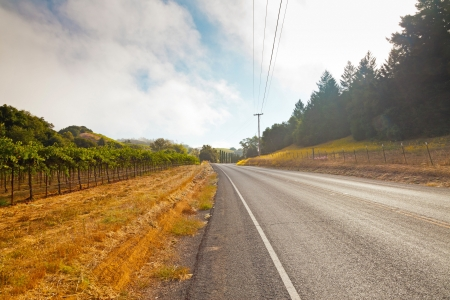 Road in winery landscape wit mural