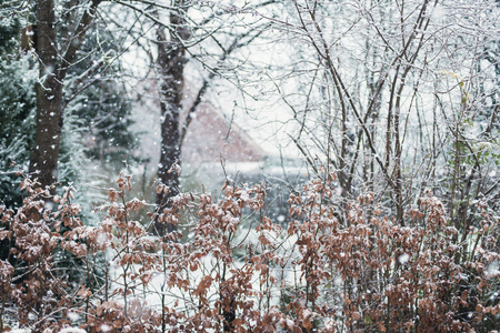 Photo for Beech hedge in snowy backyard during snowstorm. - Royalty Free Image