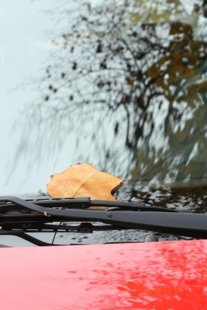 A fallen autumn leaf on a red car window