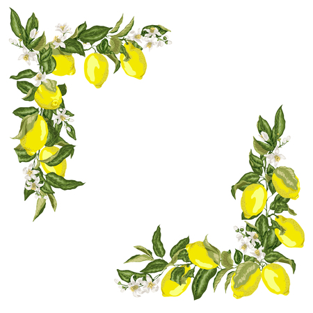 Ilustración de Set of corner square frame template with citrus lemon flower and fruits in vector illustration - Imagen libre de derechos