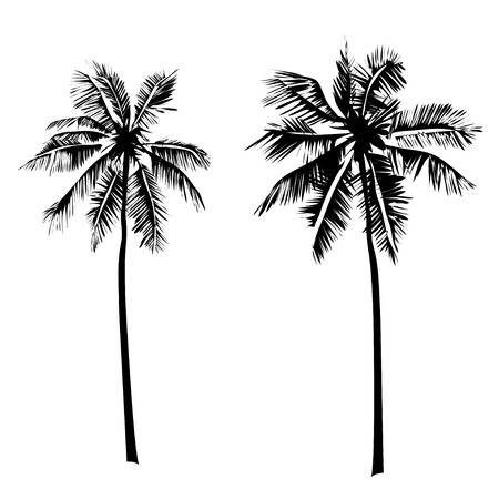 Illustration for Vector Set tropical palm trees,  black silhouettes isolated on white background. - Royalty Free Image