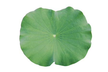 Photo pour water on lotus leaf - image libre de droit
