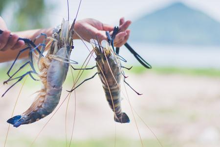Foto de woman holding and serve with fresh water shrimp - Imagen libre de derechos