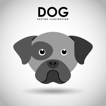 products for dogs design, vector illustration eps10 graphic