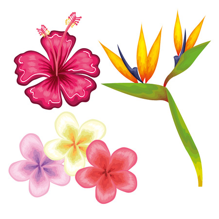 Illustration for Colorful tropical flowers over white background vector illustration - Royalty Free Image