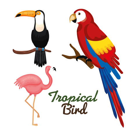 Illustration for Toucan guacamaya and flamingo over white background vector illustration - Royalty Free Image