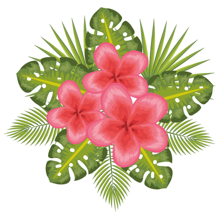 Illustration for Fuchsia tropical flowers with leaves over white background vector illustration - Royalty Free Image