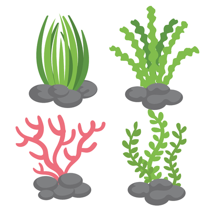 Illustration for Sea plants over white background vector illustration - Royalty Free Image