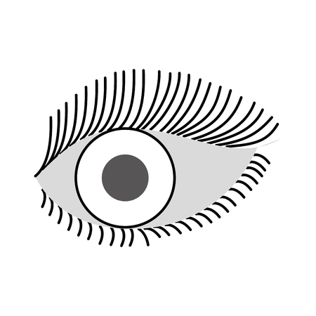 Illustration for beautiful female eye wide open with eyebrow and eyelash vector illustration - Royalty Free Image
