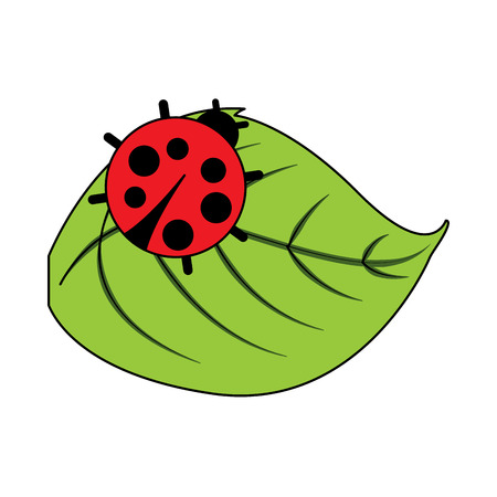 Illustration pour cute ladybug in leaf natural wildlife animal vector illustration - image libre de droit