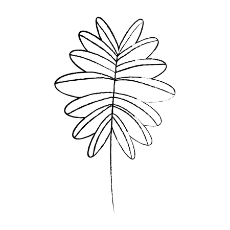 Ilustración de branch palm leaves frond natural vector illustration sketch design - Imagen libre de derechos