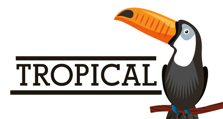 Illustrazione per Tropical toucan bird animal on branch white background vector illustration - Immagini Royalty Free