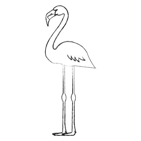 Ilustración de Exotic and tropical flemish bird vector illustration design - Imagen libre de derechos