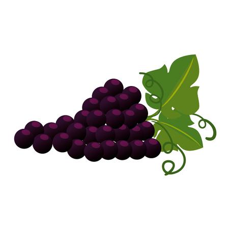 Illustration pour grapes cluster isolated icon vector illustration design - image libre de droit